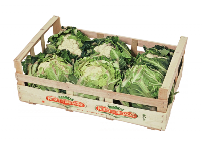 packaging of fruits and vegetables Goals / objectives this study focuses on the development and use of new types of packaging systems for fruits and vegetables there are several new sustainable.